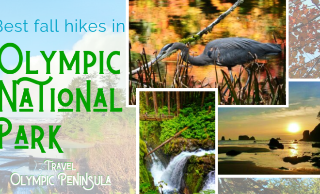 These are the five best fall hikes in Olympic National Park that you can do in any weather (and are actually great year round! Beach and rainforest hiking.