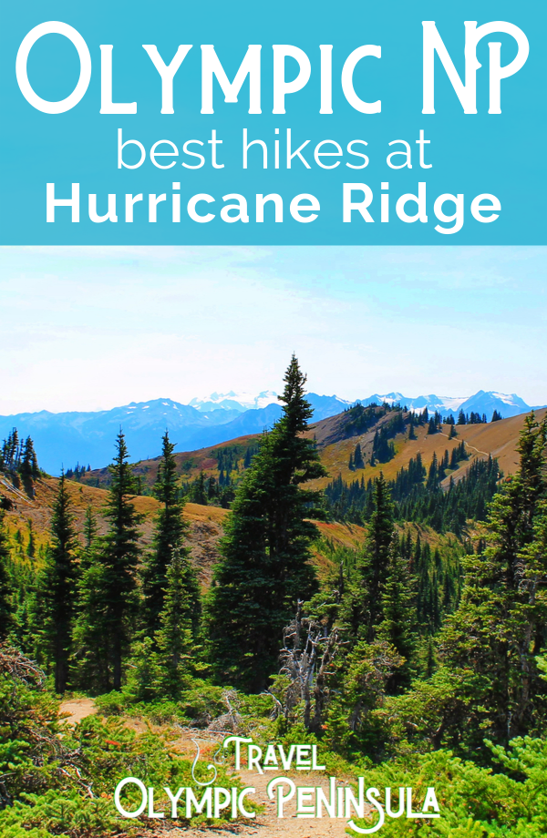 Hiking Hurricane Ridge is one of the best day trips to the Olympic Peninsula. All the trails rated from easiest to most difficult, Olympic National Park views and nature at its best. #hiking #nationalparks #OlympicNationalPark #Washington