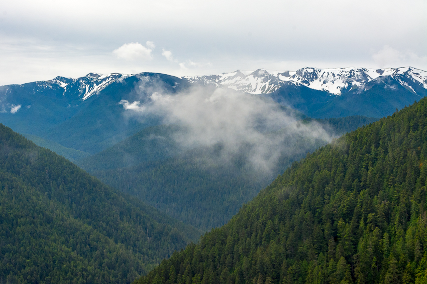 Olympic National Park - Snowy Mountains from Hurricane Ridge - Postcards from Seattle 1