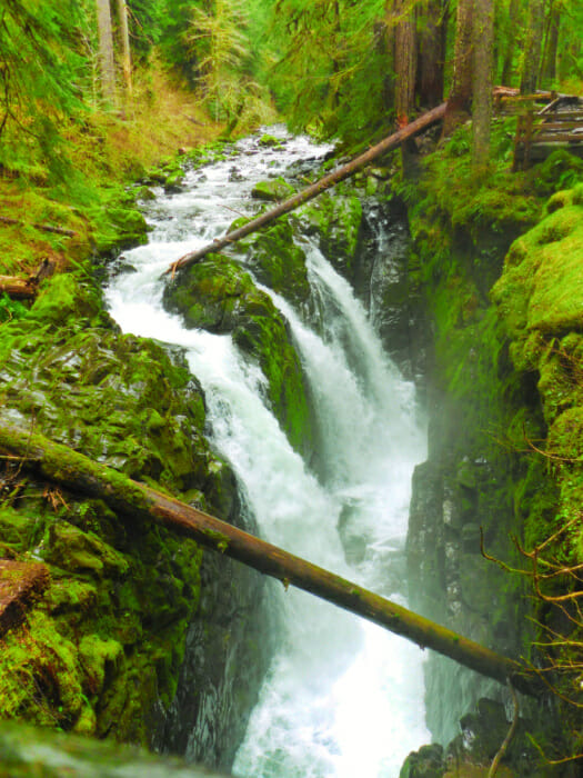 Olympic National Park - Sol Duc Falls - Ordinary Adventures 1
